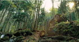 Sasso Fratino - Patrimonio naturale mondiale Unesco - Arcieri di Yr